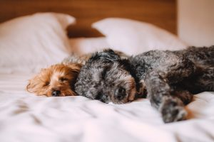two dogs cuddling up on cozy bedding in a holiday home with great interior design vacation rental